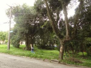 Local: Terreno na R. Tabajaras, próximo ao nº 224. Bairro Vila Izabel. (foto Lucas Prates)